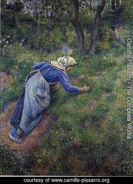 Peasant Gathering Grass