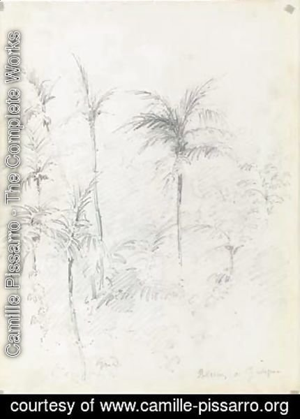 A landscape with palm trees
